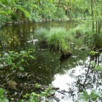 Hlinský rybník